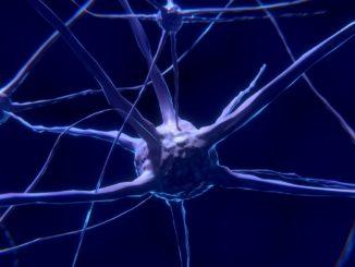 Cannabis verhindert den Alterungsprozess im Gehirn