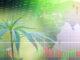 Was ist los mit Aurora Cannabis?
