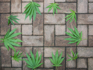 Hanf (Cannabis) als Alternative zu Beton