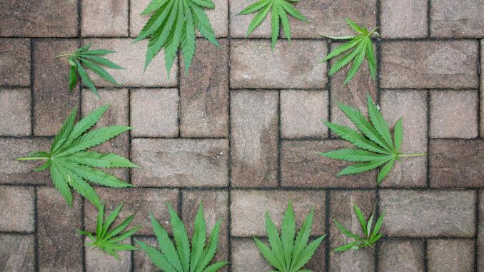 Hanf (Cannabis) als Alternative zu Beton