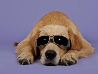 Cannabidiol oder CBD gegen Epilepsie bei Hunden