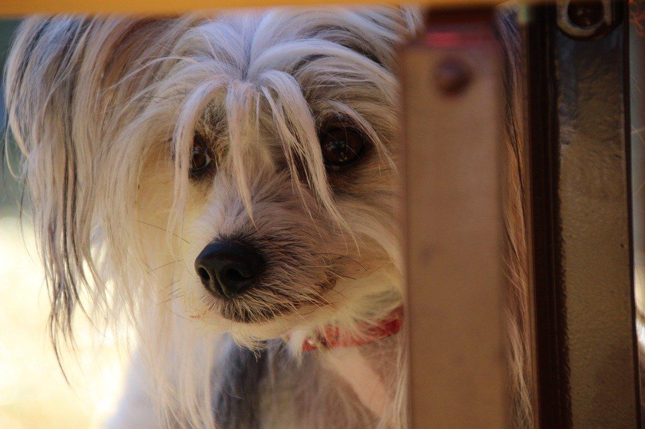 CBD-Öl ist hilfreich gegen Ängste bei Hunden
