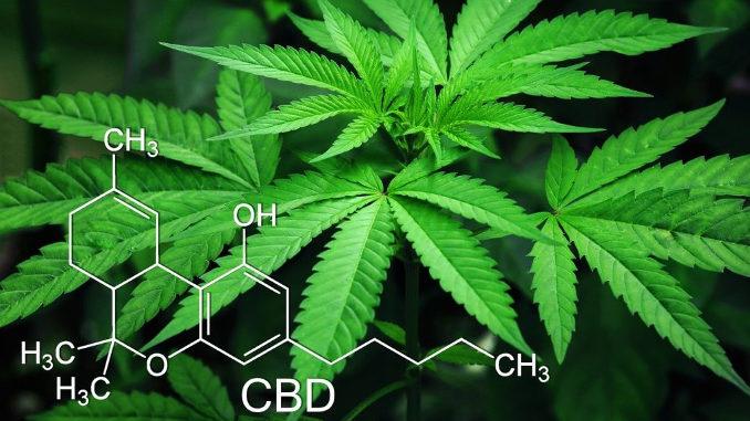 Cannabis oder Cannabidiol (CBD) gegen Corona