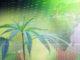 Was ist los mit Aurora Cannabis