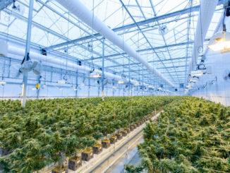 Cannabis Tilray schließt Vereinbarung mit Hormosan